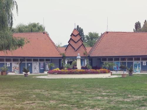 Balaton - Swan